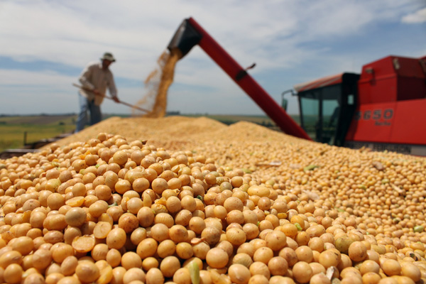 Đậu nành GMO